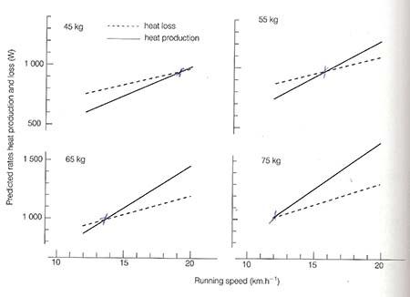 Lore of Running by Noakes - varmeproduktion og varmeafgivelse: kropsvægt betydning